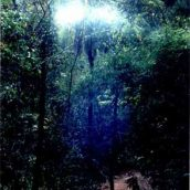 Segunda experiência consciente com a energia de um portal