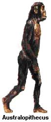Primata1