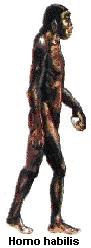 Primata2