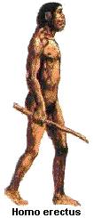 Primata3
