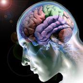 Cérebro à procura da alma