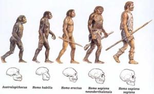 teoriaevolucionista3
